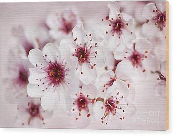 Spring Cherry Blossom Wood Print by Elena Elisseeva