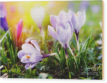 Wood Print featuring the photograph Spring by Christine Sponchia