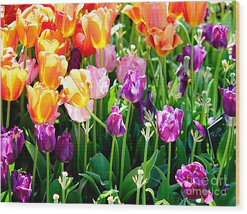 Spring Color Wood Print by Shijun Munns