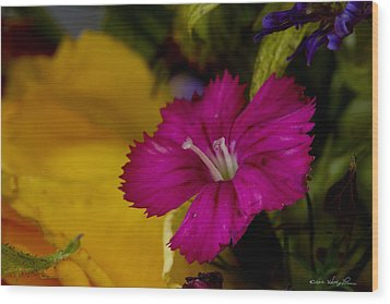 Wood Print featuring the photograph Spring Colors by Kathy Ponce