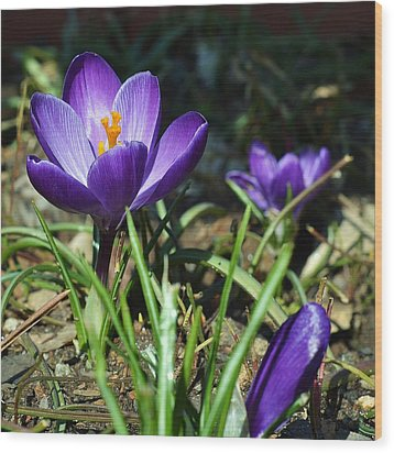 Wood Print featuring the photograph Spring Comes by Mary Zeman