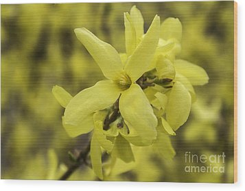 Spring Comes Sofly Wood Print by Arlene Carmel