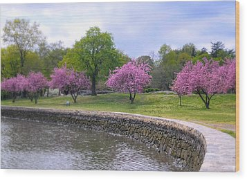 Spring Cove Wood Print by Diana Angstadt