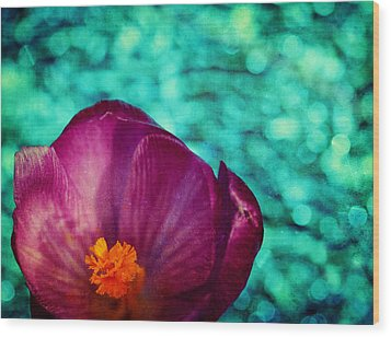 Wood Print featuring the photograph Spring Crocus by Peggy Collins