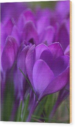 Spring Crocuses Wood Print by Peggy Collins