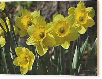 Spring Daffodils Wood Print by Christina Rollo
