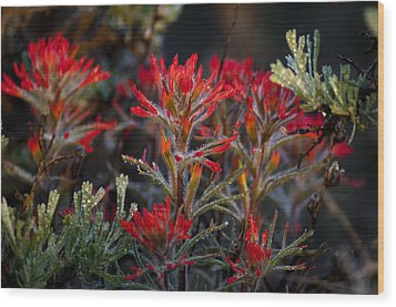 Spring Dew Paintbrush Wood Print by Eric Rundle