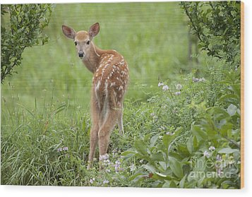 Spring Fawn Wood Print by Jeannette Hunt