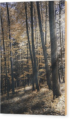 Wood Print featuring the photograph Spring Forest by Bruno Santoro