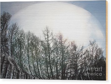 Spring Forest Wood Print