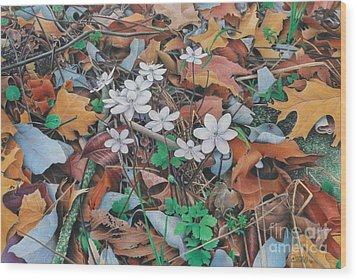 Spring Forward Wood Print by Pamela Clements