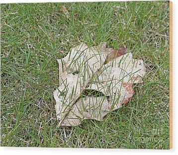 Spring Grass Growing Wood Print by Ann Horn