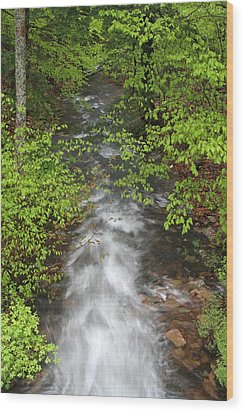 Spring Green Framing Bubble Brook  Wood Print by Juergen Roth