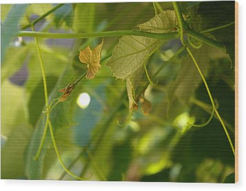 Wood Print featuring the photograph Spring Green Grape Vines by Adria Trail