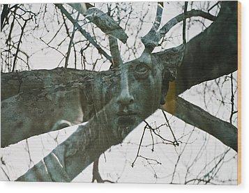 Spring Grove 13 Wood Print by Scott Meyer