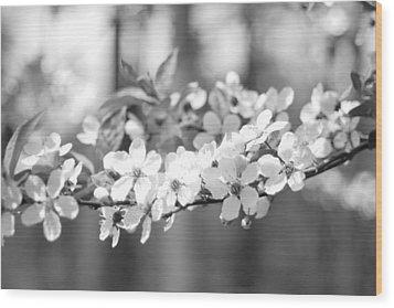 Spring Has Sprung Wood Print by Barbara Bardzik