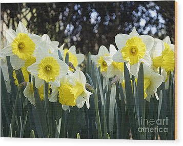 Wood Print featuring the photograph Spring Has Sprung by Rafael Quirindongo