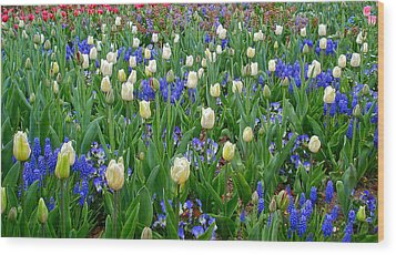 Spring In Giverny Wood Print