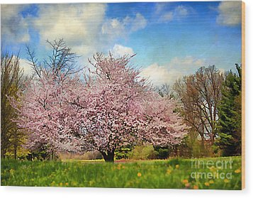 Spring In Kentucky Wood Print by Darren Fisher