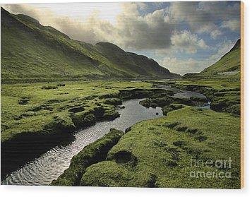 Spring In Scotland Valley Wood Print by Matt Tilghman