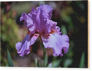 Spring Iris Bloom Wood Print