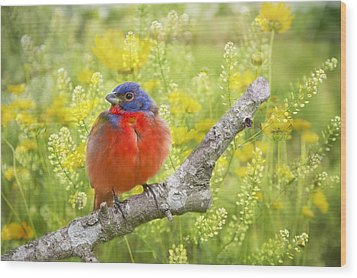 Spring Is A New Beginning Wood Print by Bonnie Barry