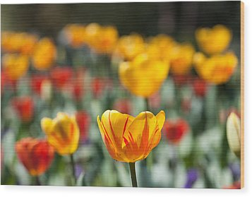 Spring Is Upon Us Wood Print