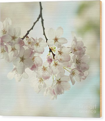 Wood Print featuring the photograph Spring Light by Sylvia Cook