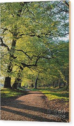 Spring Light  Wood Print by Tim Gainey