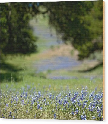 Spring Lupines Wood Print by Art Block Collections