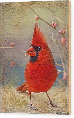 Spring Male Norther Cardinal Wood Print by Debbie Portwood