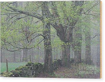 Spring Mist Wood Print by Alan L Graham