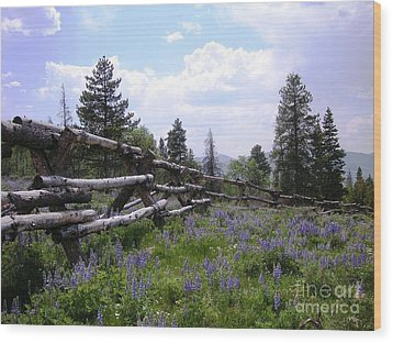 Spring Mountain Lupines 2 Wood Print by Crystal Miller