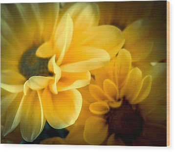 Spring Mums Wood Print by Judy Hall-Folde