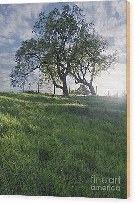 Spring Oaks Wood Print by Stu Shepherd