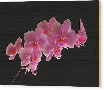 Spring Orchids Wood Print by Juergen Roth