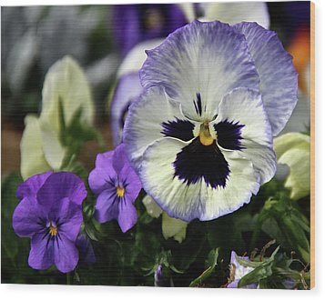 Spring Pansy Flower Wood Print