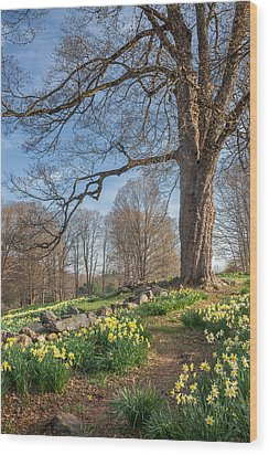 Spring Path Wood Print by Bill Wakeley