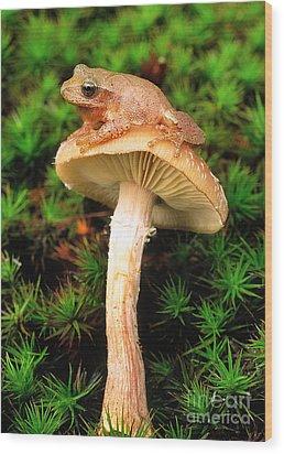 Spring Peeper On Mushroom Wood Print by Gary Meszaros