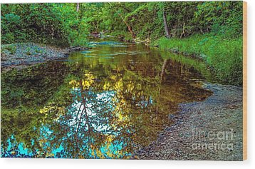 Spring Reflection  Wood Print by Peggy Franz