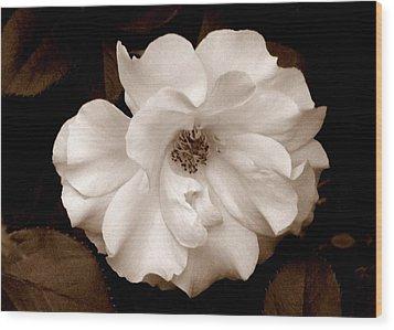 'spring Rose' Wood Print