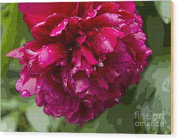 Spring Shower Peony 2 Wood Print by Jeanette French
