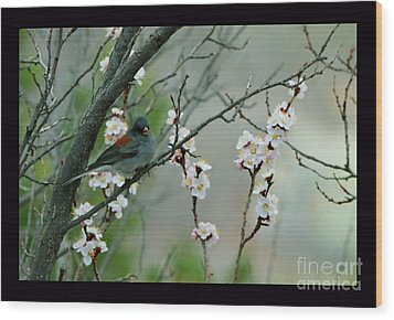 Spring Snow In Apricots Wood Print by Susanne Still