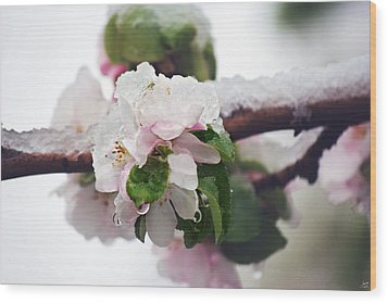 Spring Snow On Apple Blossoms Wood Print by Lisa Knechtel