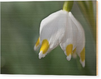 Spring Snowflake Wood Print by Andreas Levi