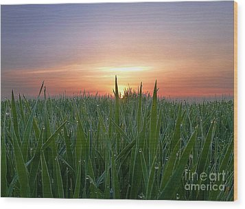 Spring Sunrise Wood Print by AmaS Art
