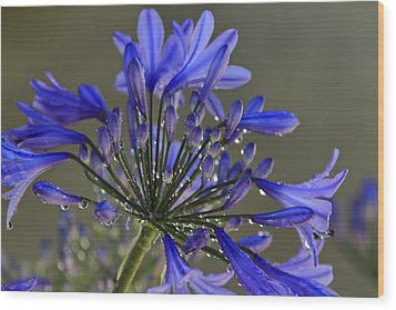 Spring Time Blues Wood Print by Menachem Ganon