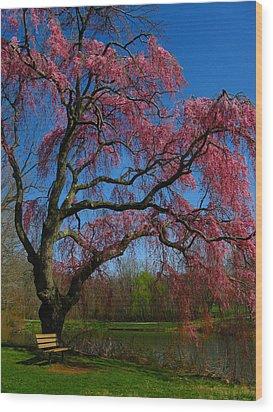 Spring Time Wood Print by Raymond Salani III