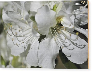 Wood Print featuring the photograph Spring Time by Sandy Molinaro