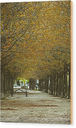 Wood Print featuring the photograph Spring Trees Blossoming In Montreal by Sandra Cunningham